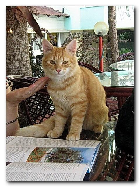 557cfaaf70 Turkish Cats - Side 3