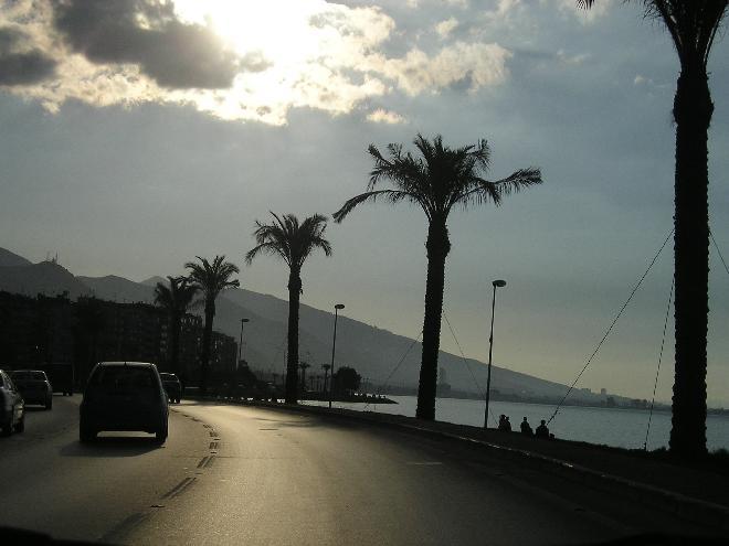 Palmtrees alongside the boulevard,  Göztepe