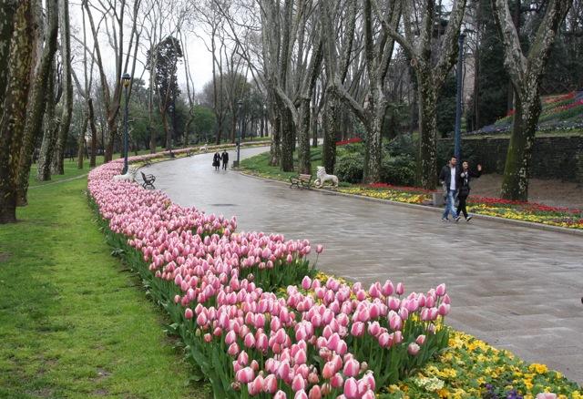 Tulips in Gulhane Park