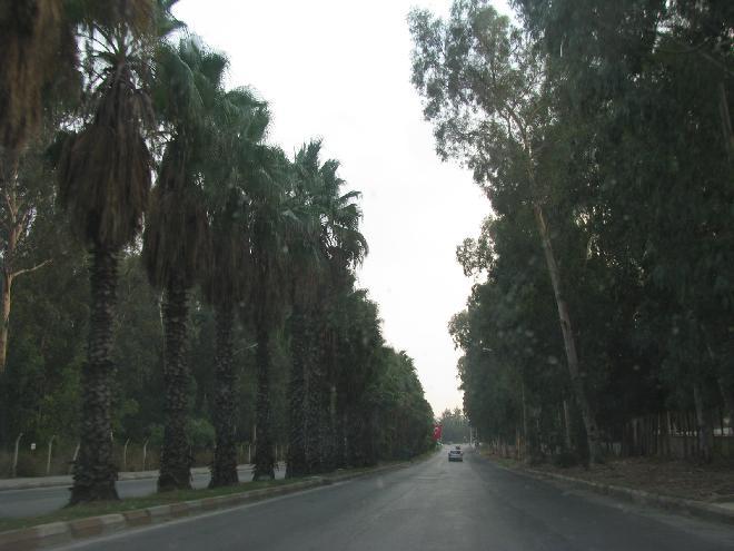 Palm trees in Adana