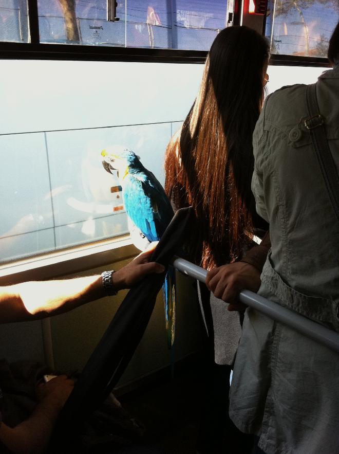 strange things seen on autobus in Istanbul