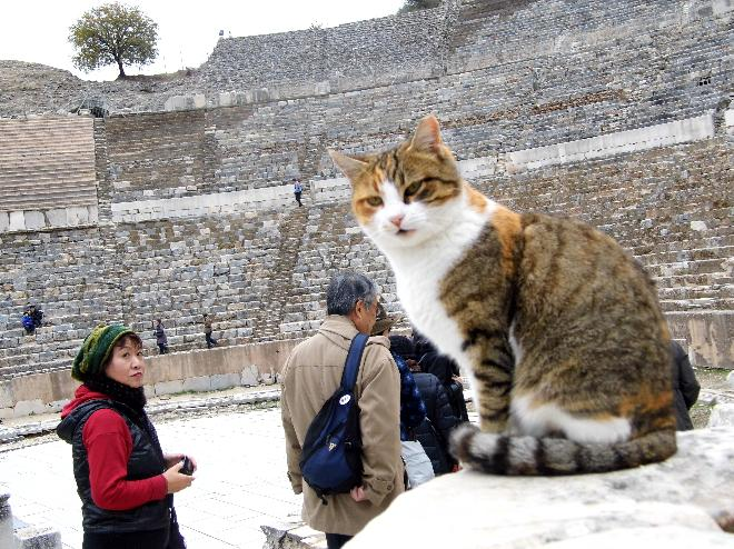 A cat at Ephesos