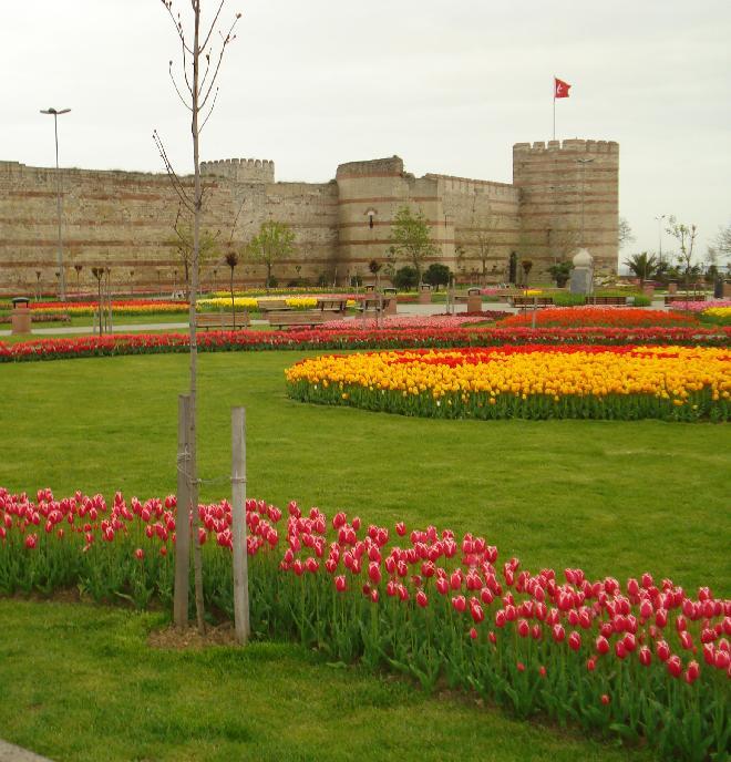 Tulips :)
