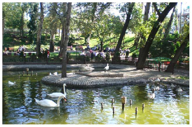 White swans in Kuğulu Park