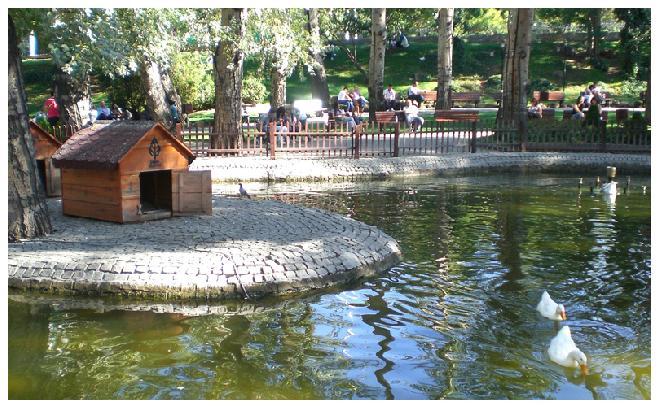 Ducks in Kuğulu Park