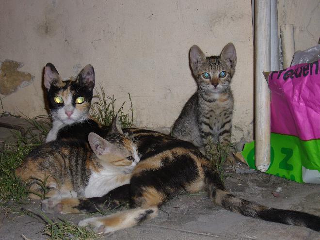 Lefkoşa alley cats