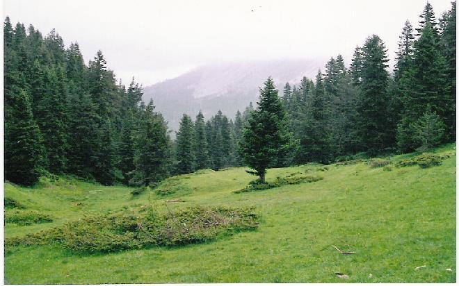 Ilgaz mountain