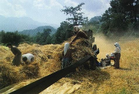 Turkish village - harvest time